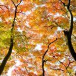 日本の四季の豊かさと家電
